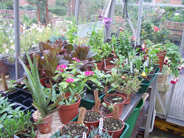 Garden past its best, time for composting