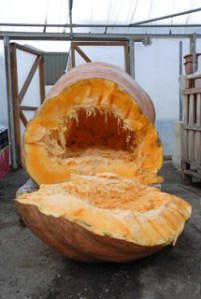 The Giant Pumpkin story continues...