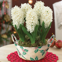 Our top 10 Christmas plant gifts