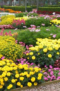 Top 10 summer bedding plants
