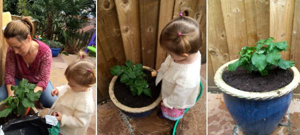Raspberry surprise – a little bit of help in the garden