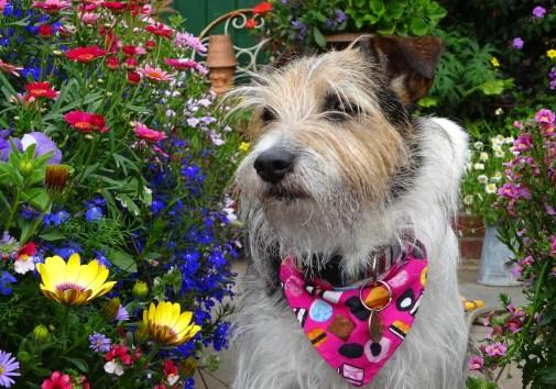 Geoff's dog Albert