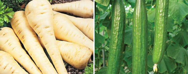 Parsnip 'Gladiator' F1 Hybrid and Cucumber 'Bella' F1 Hybrid