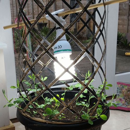 Tower Pot for Sweet peas