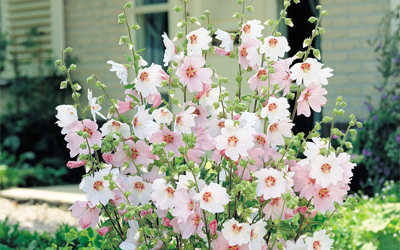 What are you growing in the garden this spring?