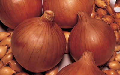 Don't put up with inflated onion pricing. Grow your own and save £££s