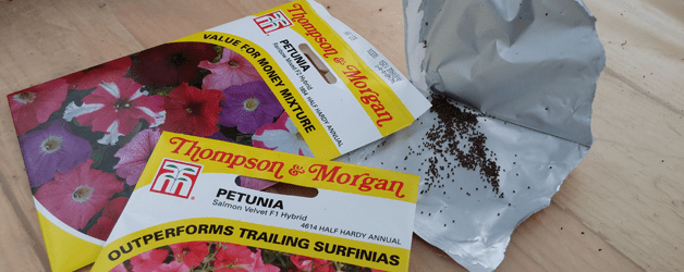Petunia seed packets and seeds