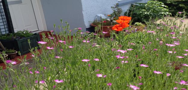 Amanda's garden
