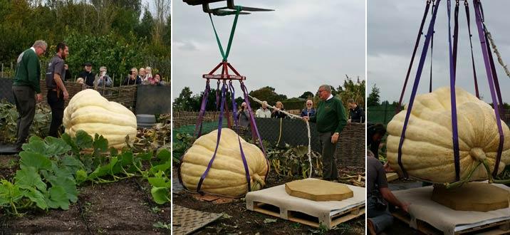 rhs-pumpkin-images