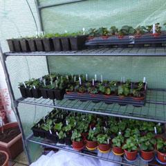 plastic greenhouse - full