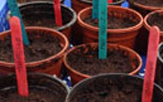 Amanda's update – March, mowers and sowing seeds