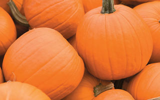 Today is National Pumpkin Sowing Day!