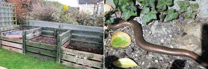 compost bins and sloworm