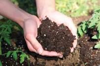 hands in soil