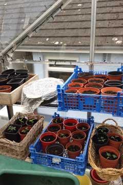 amanda's seeds - April 2017