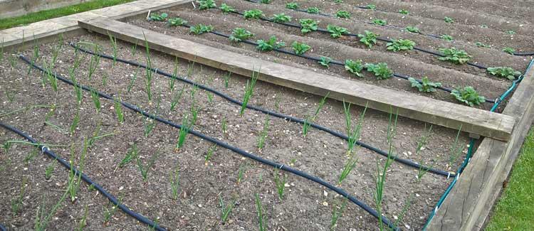 Theresa's vegetable garden