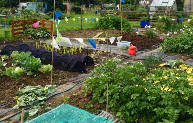 digging the earth's allotment
