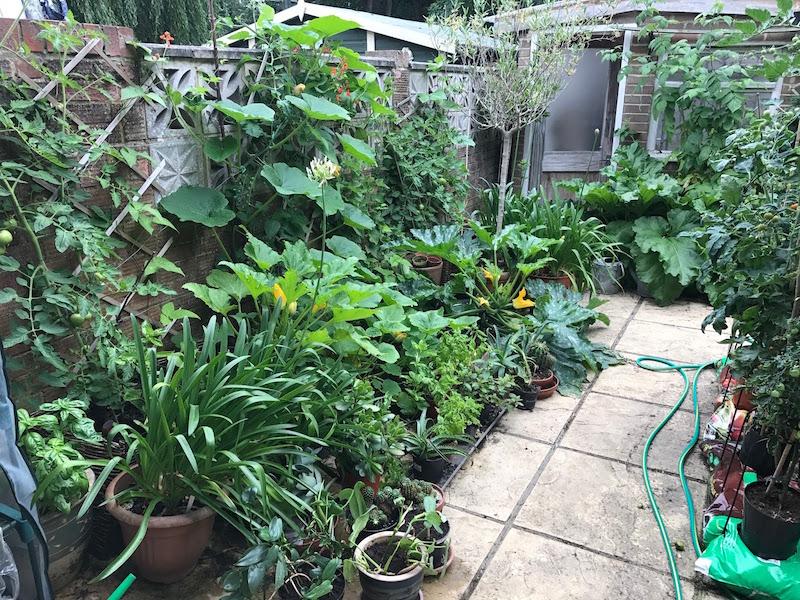 patio veg