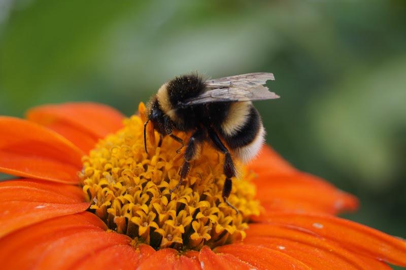 bee on flower from gardening shoe
