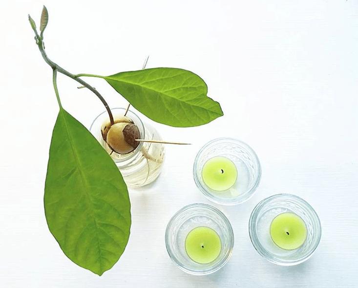 green grow avocado