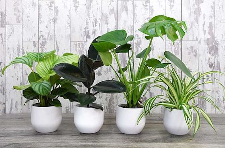 houseplant feature image