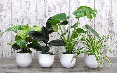 Inspiring indoor gardening blogs