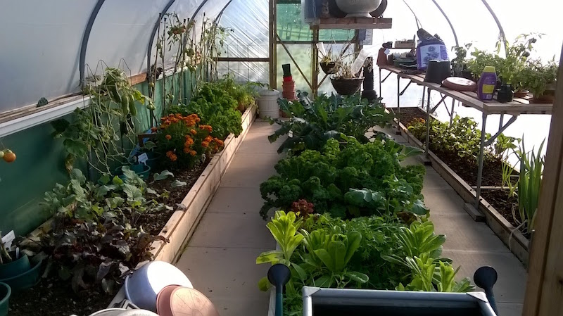 our new life in the country's polytunnel