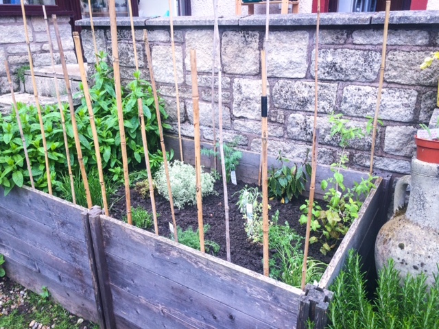 chicken proof herb garden