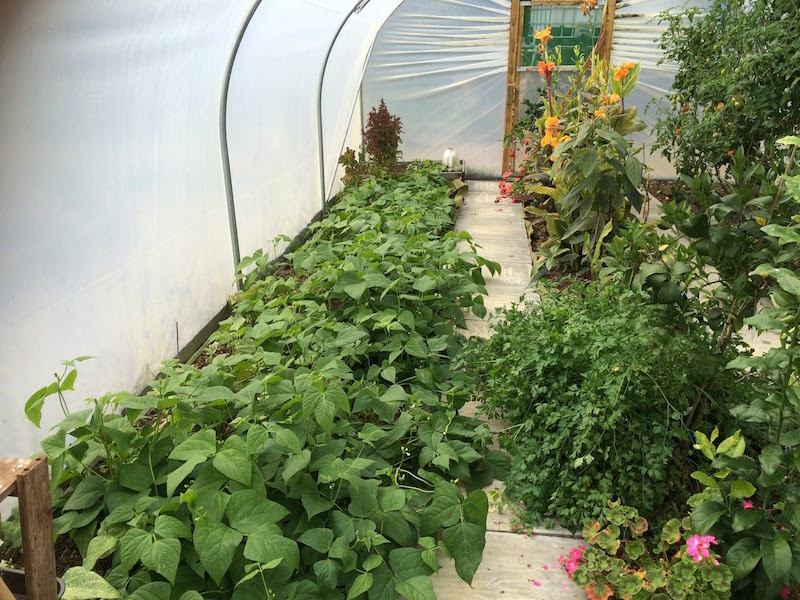 self sufficiency with a polytunnel