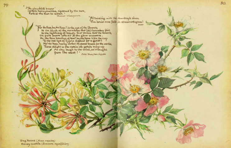 illustration inside book by cover of the book by edith holden