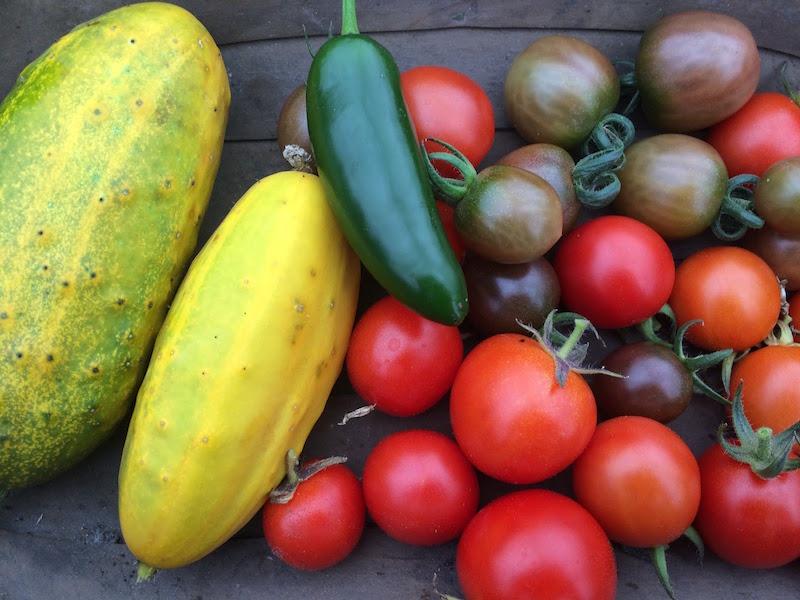 greenhouse harvest life on pig row