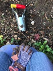 Tidy up - bulb planter