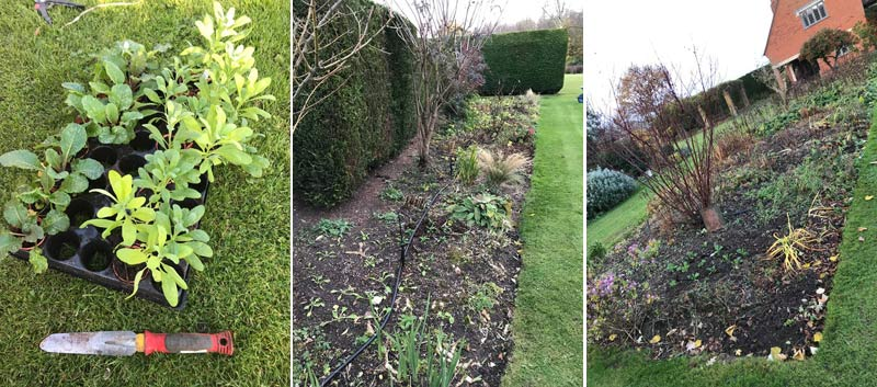 Tidy up - preparation before planting