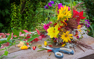 Growing summer flowers for cutting
