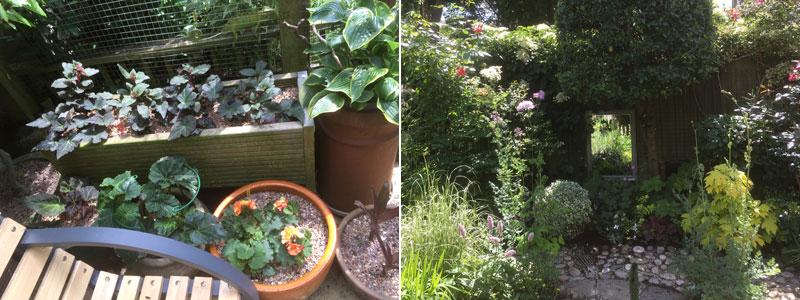 Caroline's Garden June 2018