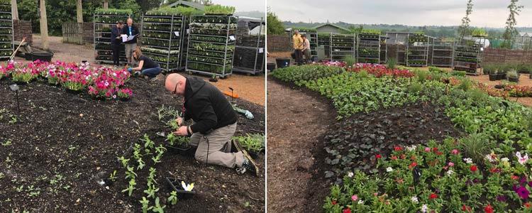 Floral Fantasia Planting