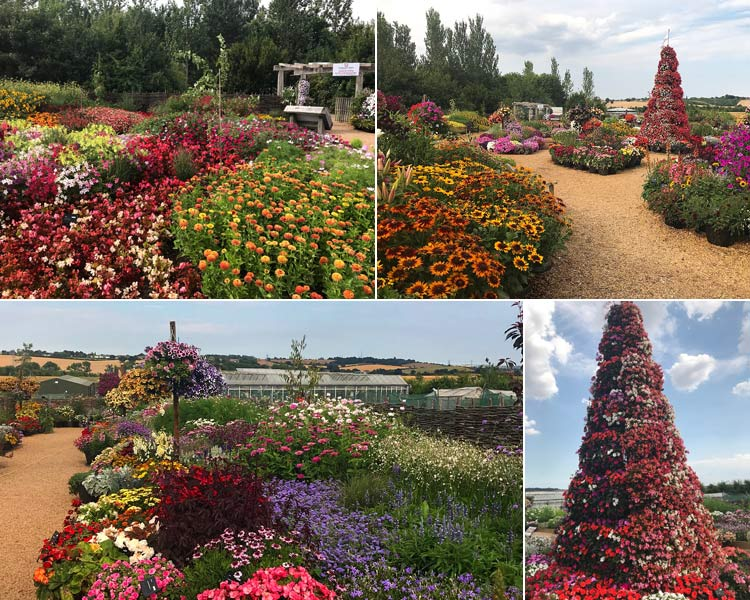 The Flora Fantasia garden at RHS Hydea Hall in full bloom