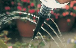 Watering, watering, watering