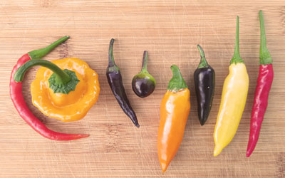 We Love Chillies!