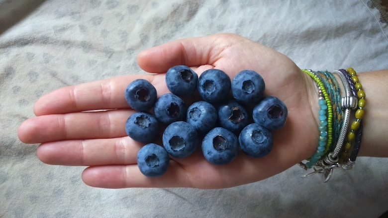 collection of blueberries in a hand