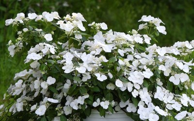 Top 10 best-selling plants of 2018