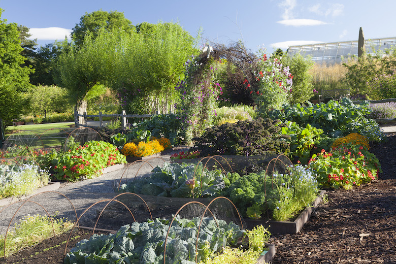 RHS Kitchen Garden at Harlow Carr