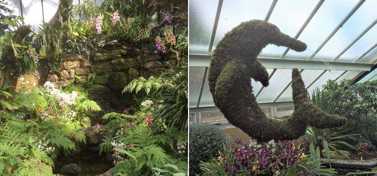 Stunning displays at the Kew Gardens Orchid Exhibition