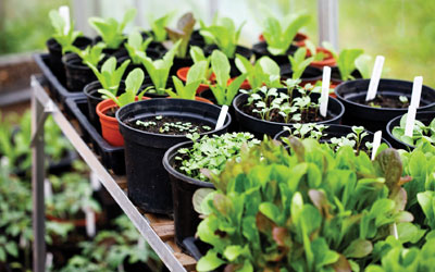 Get growing in the garden this Easter!