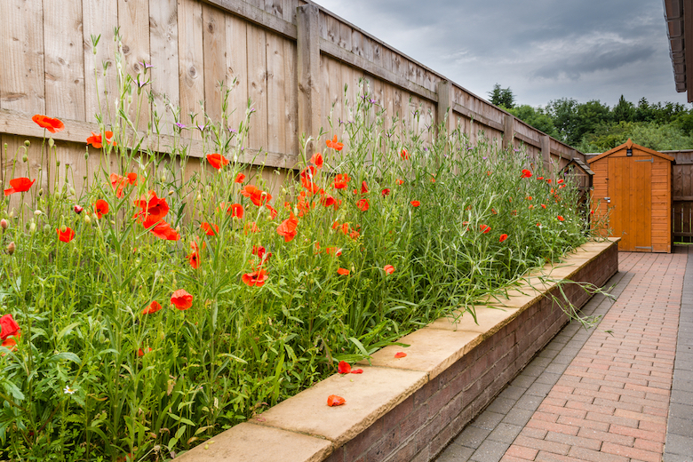 Mini meadow in raised beds along a border