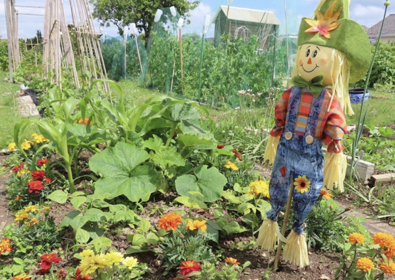 Scarecrow in a vegatble patch