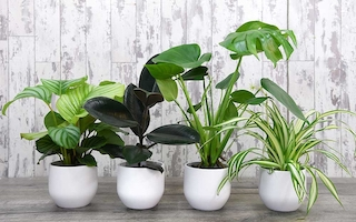 Win our 'Urban Jungle' house plant collection!