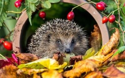 Top tips to attract wildlife to your garden