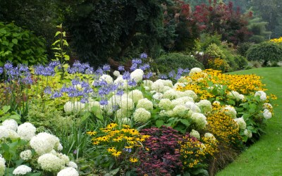 Tips for growing flowers in your garden