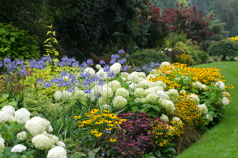 Floral garden border with different varieties of flowers, colours & shapes